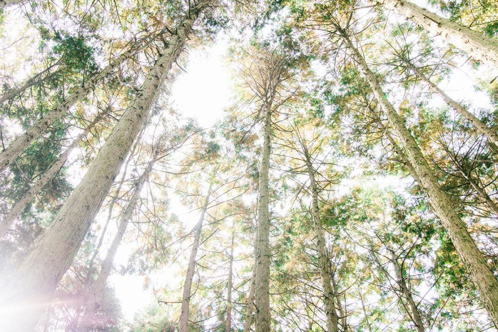 愛媛の森と暮らすリトルブランチ