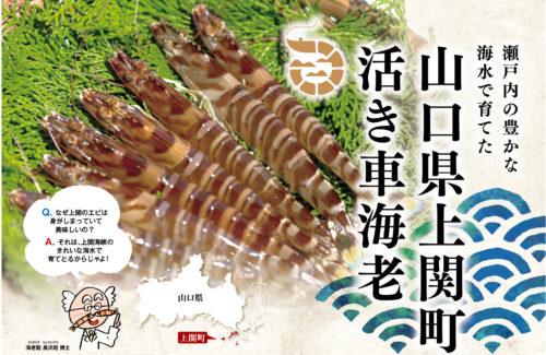 上関町車海老チラシ